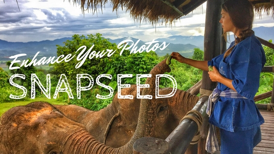 Enhance Your Photos Snapseed with woman feeding elephants